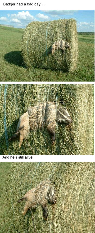 abd1 - animals have bad days too!