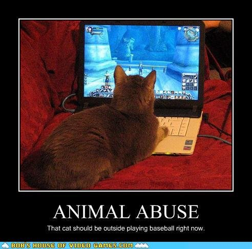 abusive - some more funneh cat pics
