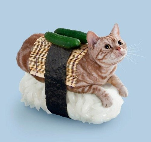 ac61s4d - sushi cats