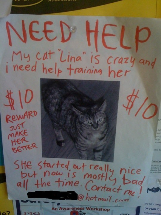 actual sign posted bulletin board uic hope someone fixes crazy cat