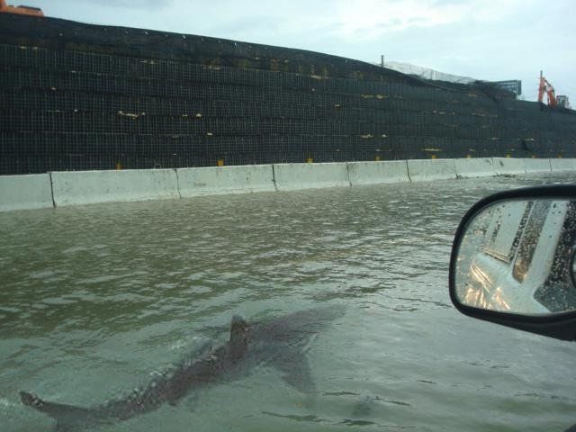after hurricane irene hit puerto rico streets flooded shark managed swimming
