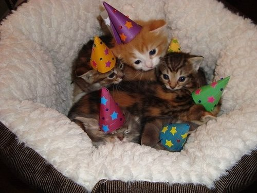 aint party like kitten party