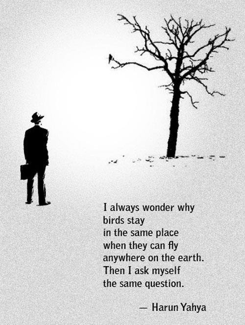 always wonder why birds stay same place harun yahya