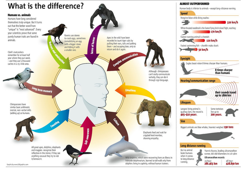animal differneces