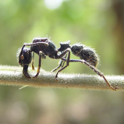 ant - the most horrifying insects
