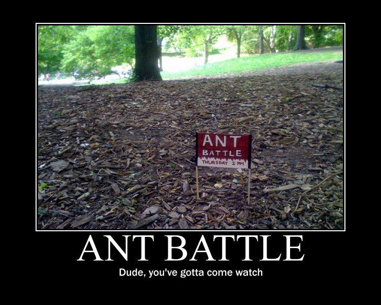 ant battle