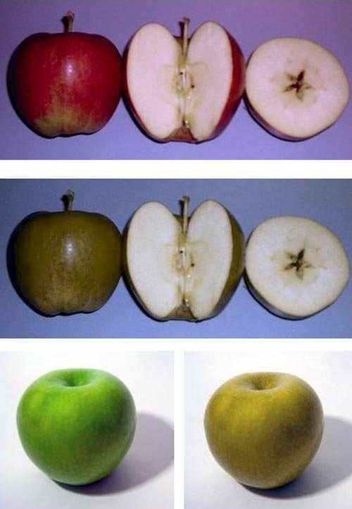 apples1 - color blindness test - ultimate edition