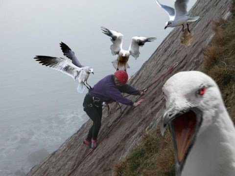 bird attack11 - good reasons why you shouldn't mess with nature