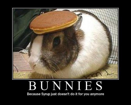 bunnies - demotivational posters
