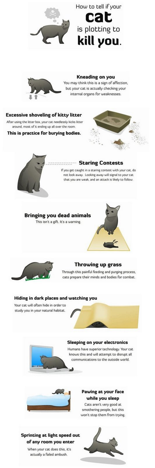 cat - how to tell if your cat is plotting to kill you