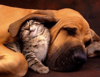 cat dog best friends