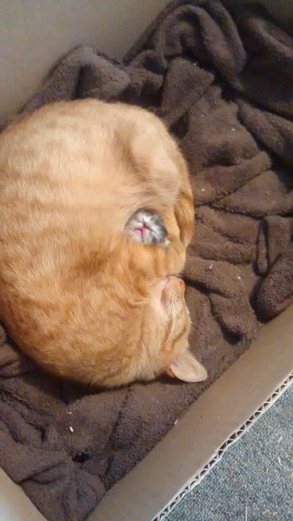 cat guarding her first only baby