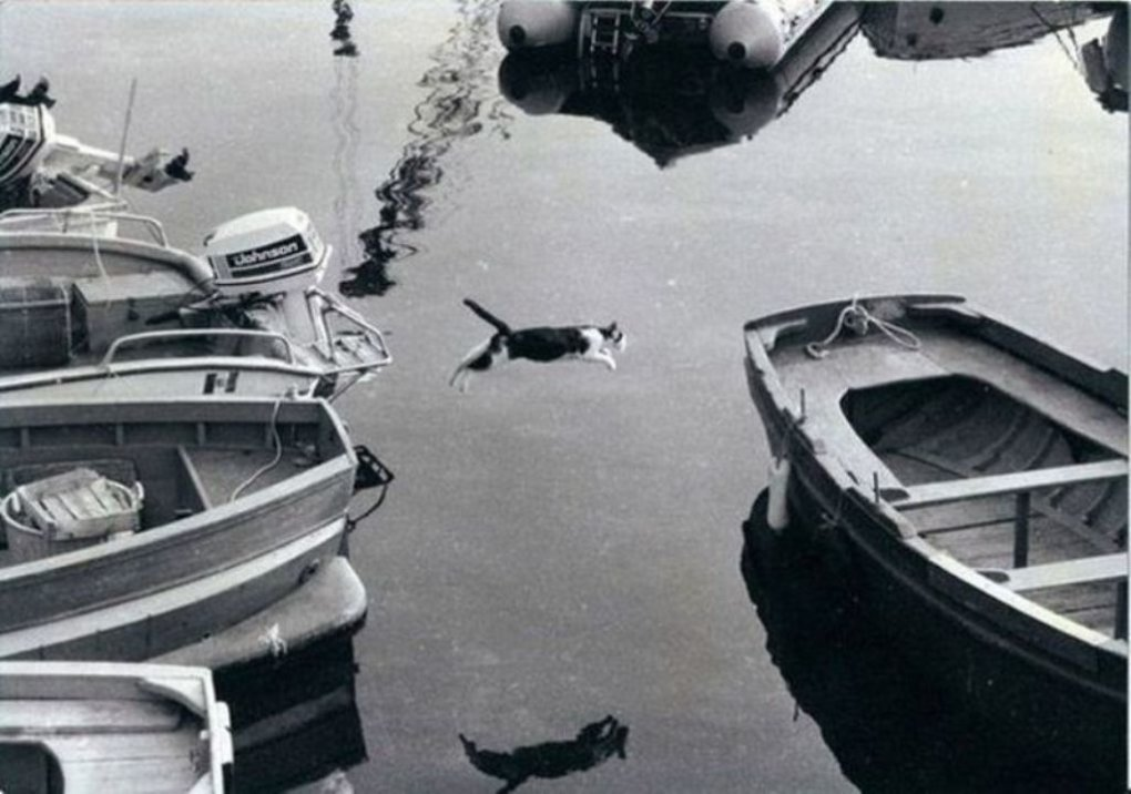 cat jumping boat