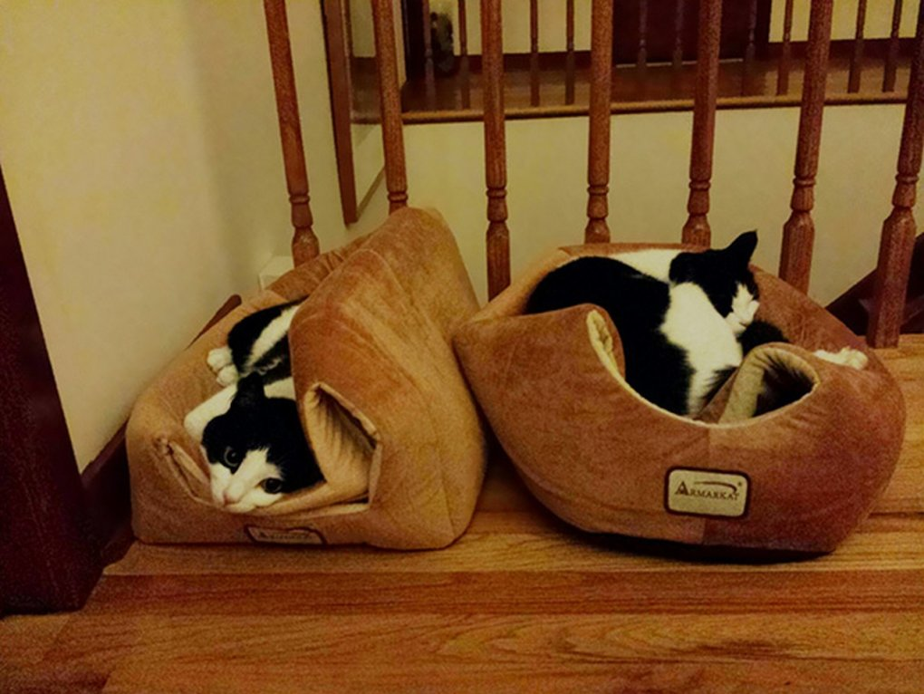 cat logic10 - 17 pictures that perfectly demonstrate cat logic