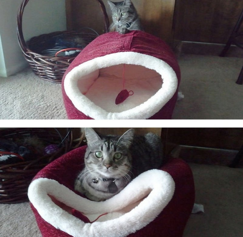 cat logic11 - 17 pictures that perfectly demonstrate cat logic