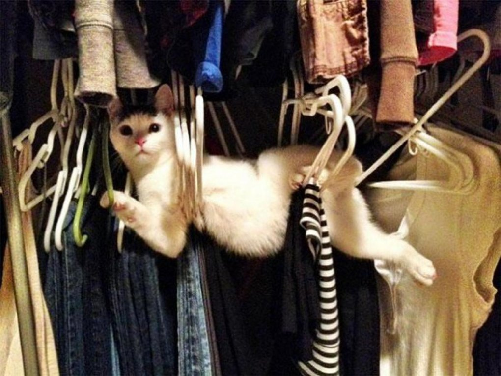 cat logic12 - 17 pictures that perfectly demonstrate cat logic