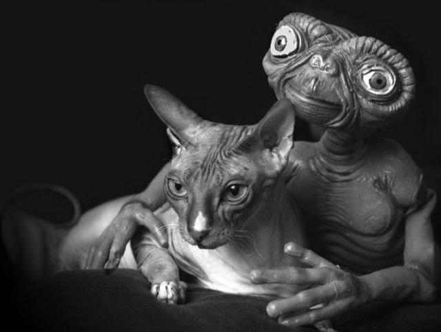 cat with et - pictures and such