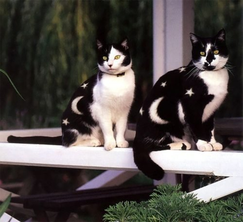 cats - awesome animals