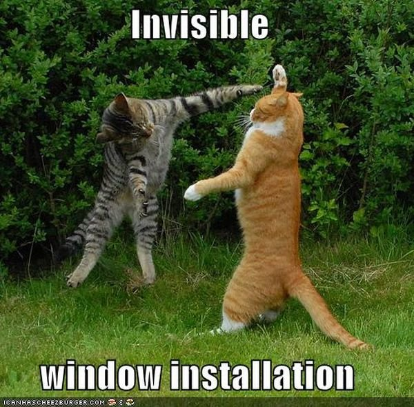 cats invisible objects
