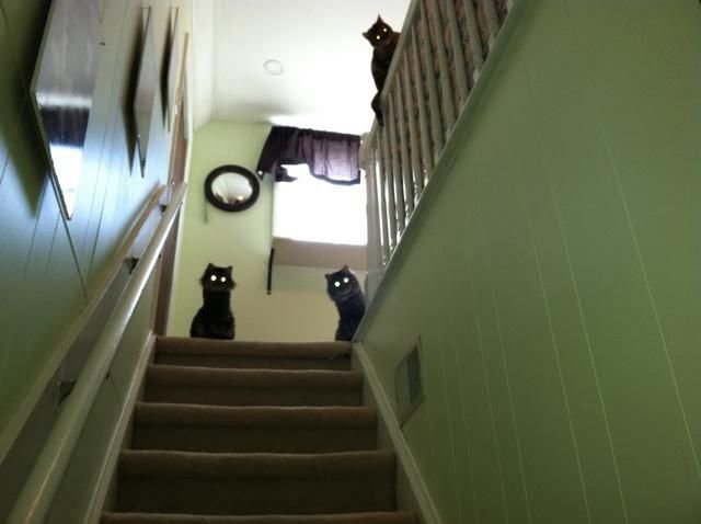 cats are watching