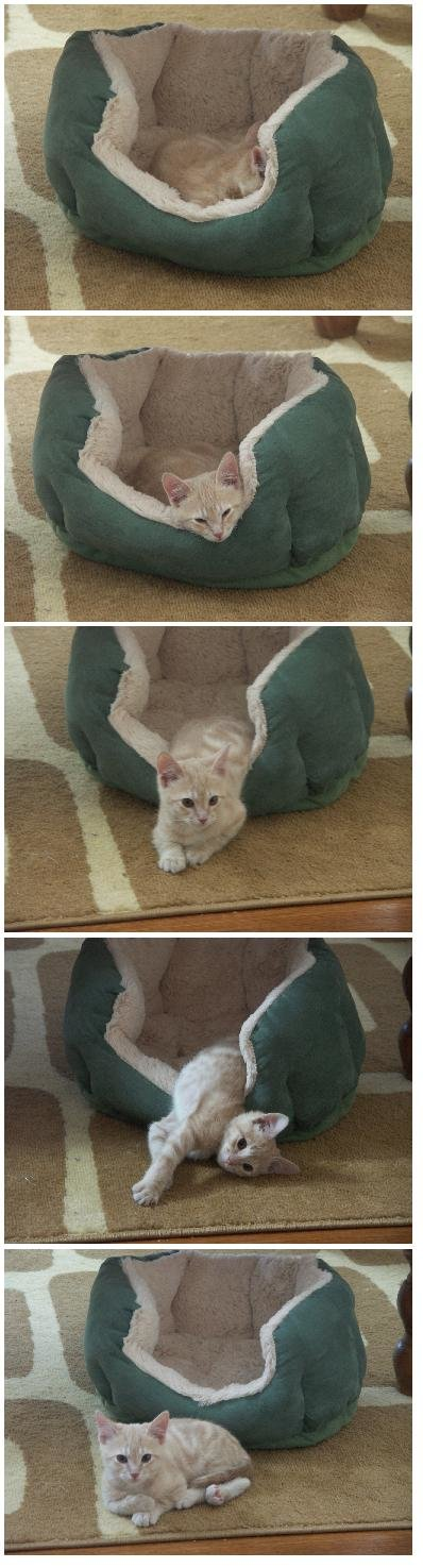 cats guide bed usage