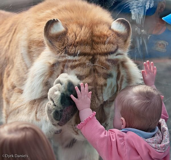 children tiger