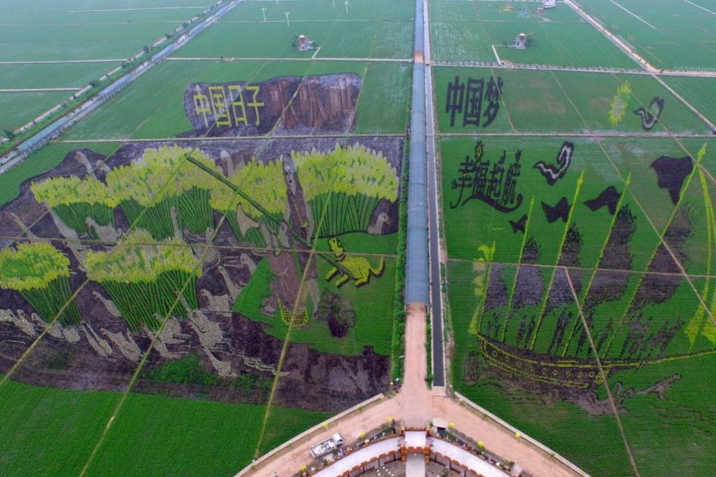 chinas paddy art
