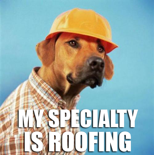construction dog roofing