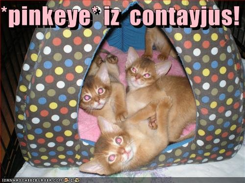 contayjus - some more funneh cat pics