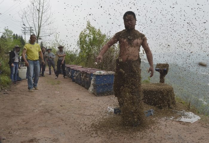 covered in bees10 - he let himself be covered in thousands of bees