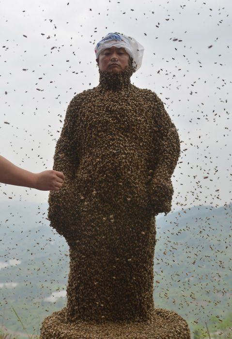 covered bees