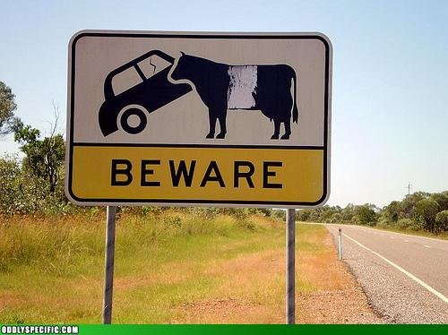 cow - funny pics from around the web.
