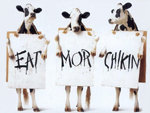 cow funny ads wallpapers