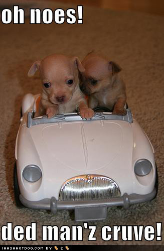 cute puppy pictures noes ded manz curve