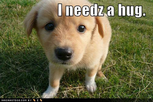 cute puppy pictures outside needs hug