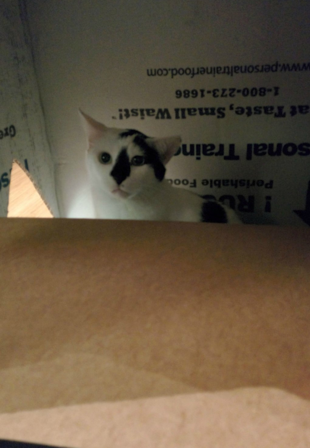 d7suo4p - why don't we build cardboard castle to our cats? this is how to do it.