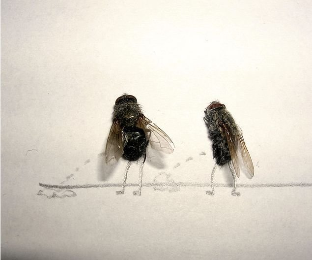 dead flies art