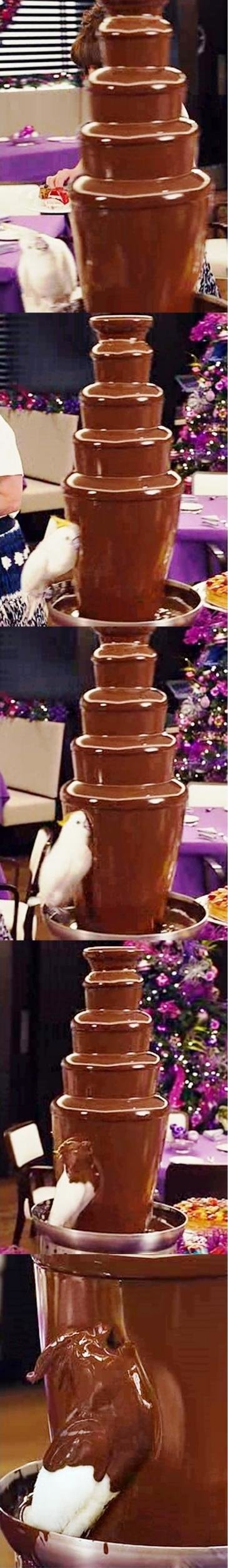 delicious chocolate covered bird