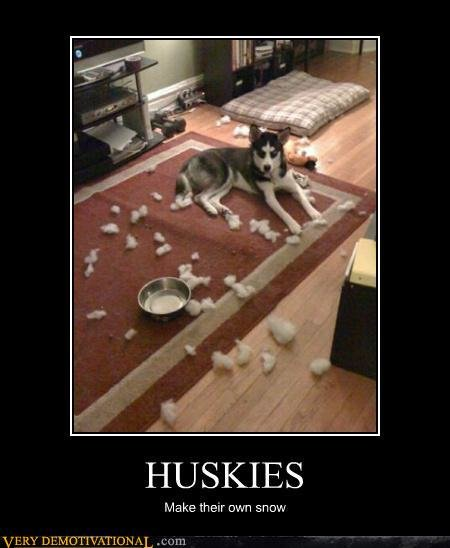 demotivational posters huskies