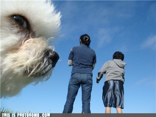 df8f9cbc 5424 489a 84d6 9f3e65db1a64 - this is....photobomb!