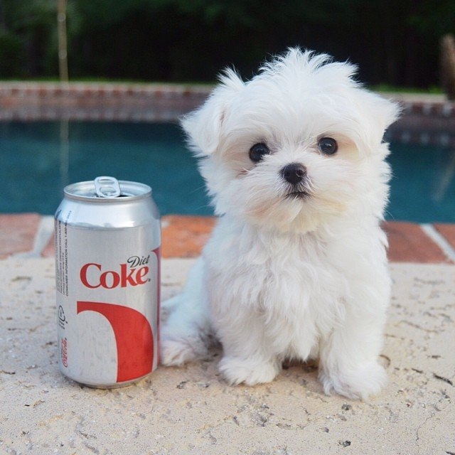 diet coke for scale