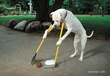 dog cleaning up size