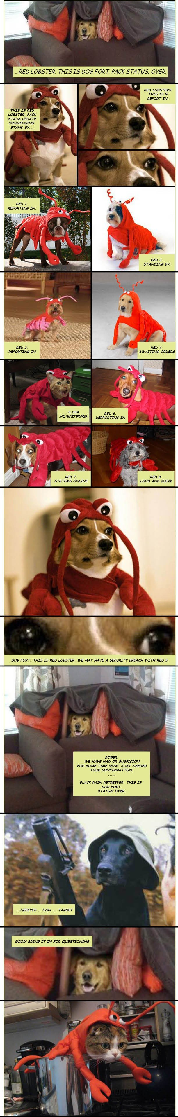 dog fort red lobster security issue