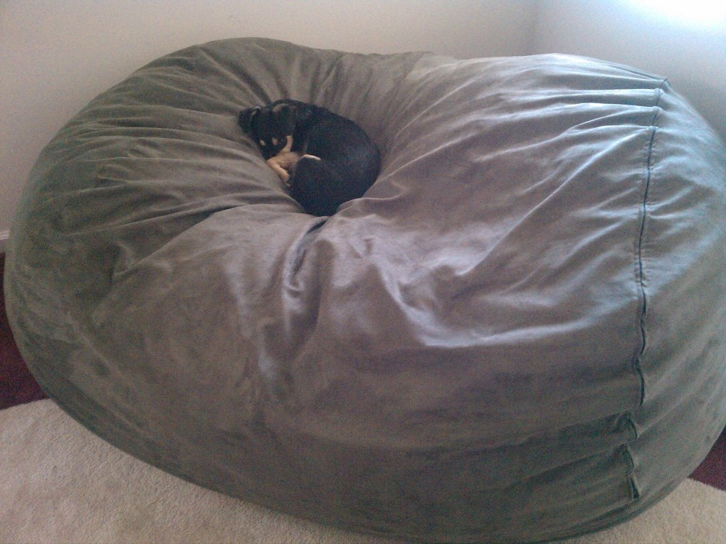 dogs bed right size