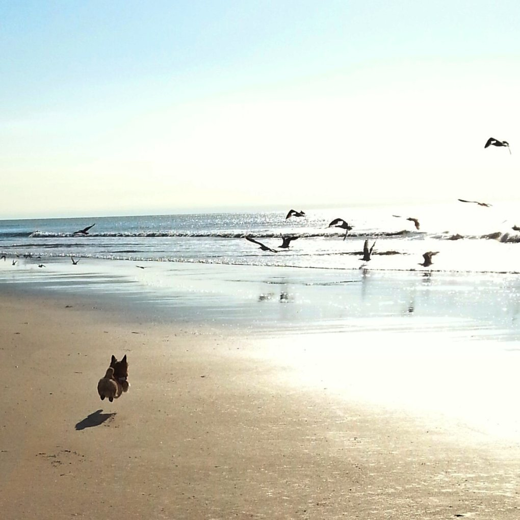 dogs first beach experience seagulls are squirrels