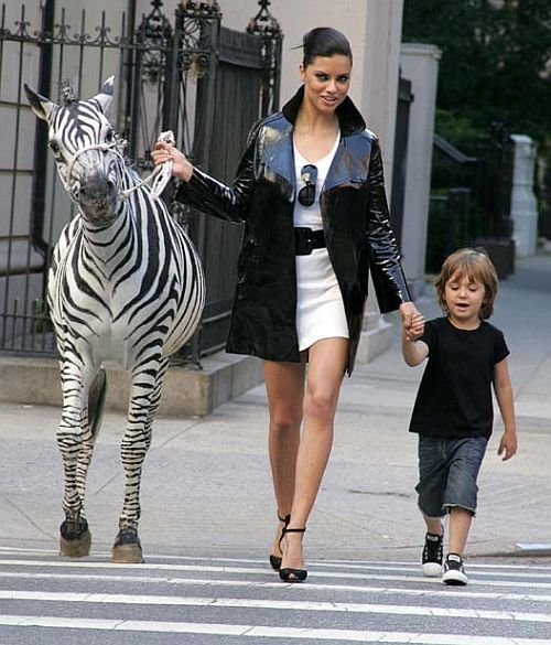 dont start bought zebra but not buying justin bieber