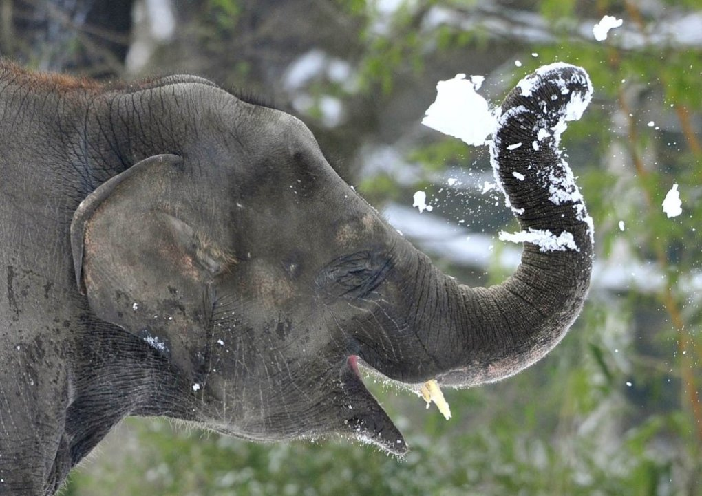 elephants playing snow