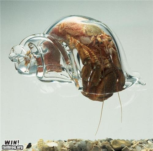 epic win photos glass shell win