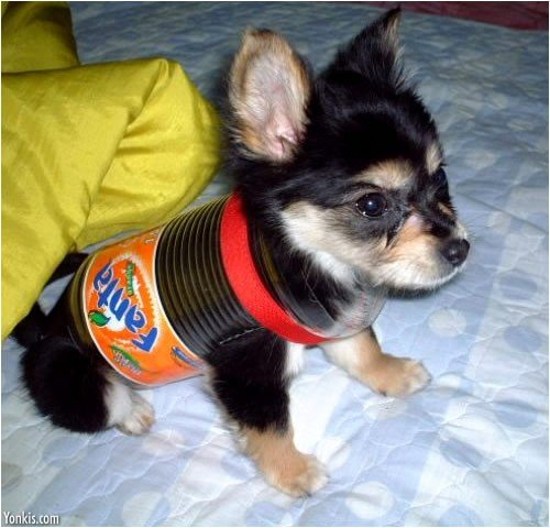 errmmm quite simply dog wearing fanta can outfit