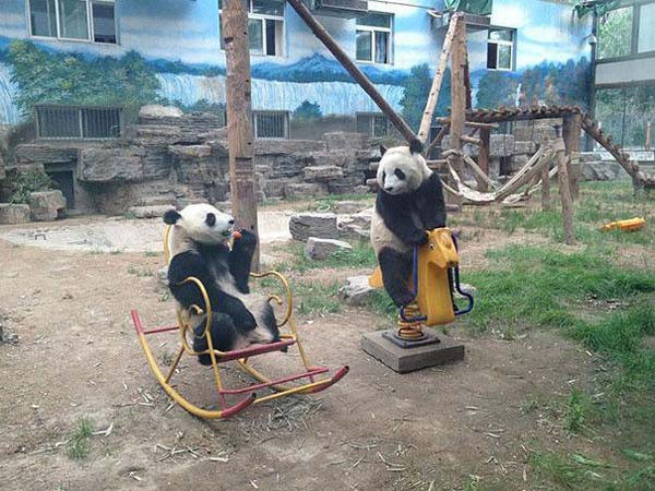 fairly certain pandas are extremely elaborate hoax